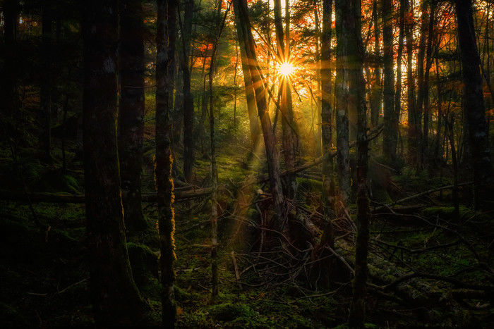 逆光を使って光と影を表現した写真