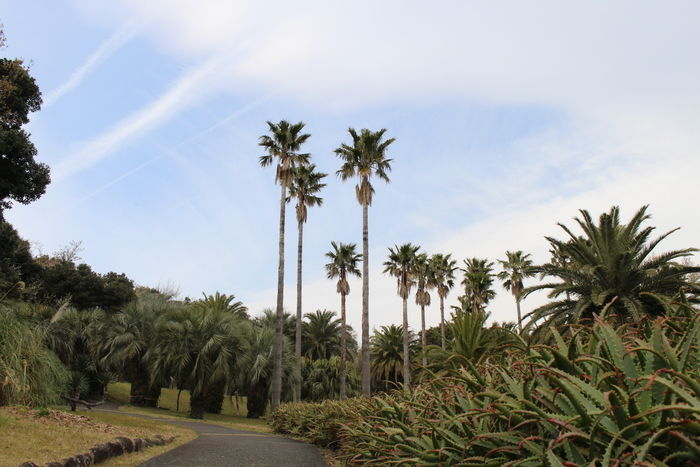 初島の庭園