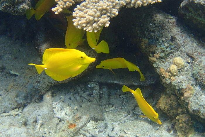 宮之浜で見られる魚