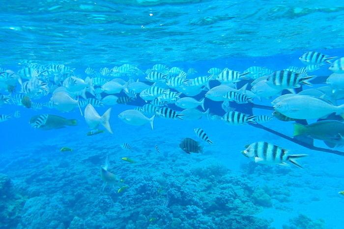 兄島瀬戸海中公園のシュノーケリング体験で見られる海の中の景色