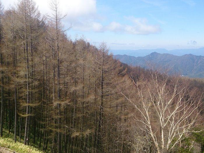 山々の絶景と木々が生い茂る様子