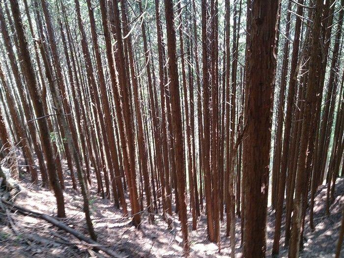 山林の遊歩道