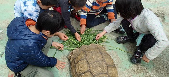 ふれあい動物園で陸ガメと遊ぶ子供達