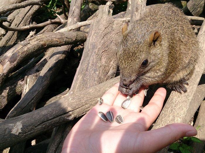町田リス園でひまわりの種を与えられるリス