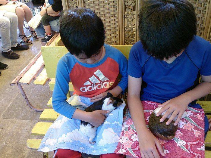 町田リス園のふれあい広場で動物と触れ合う子供