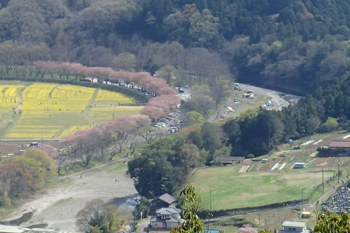 日和田山から見た巾着田の景色