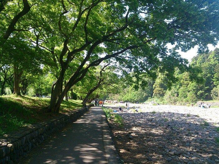 巾着田の遊歩道