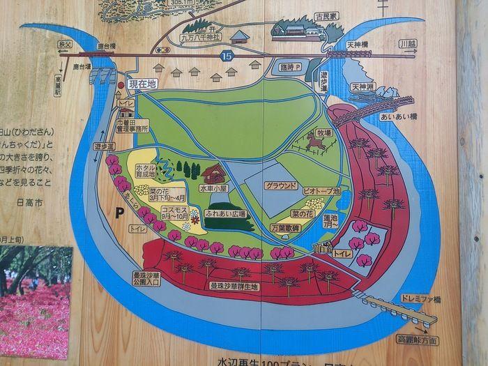 巾着田の地図