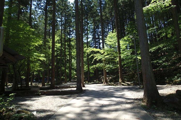 オートキャンプ長又林間サイトの様子