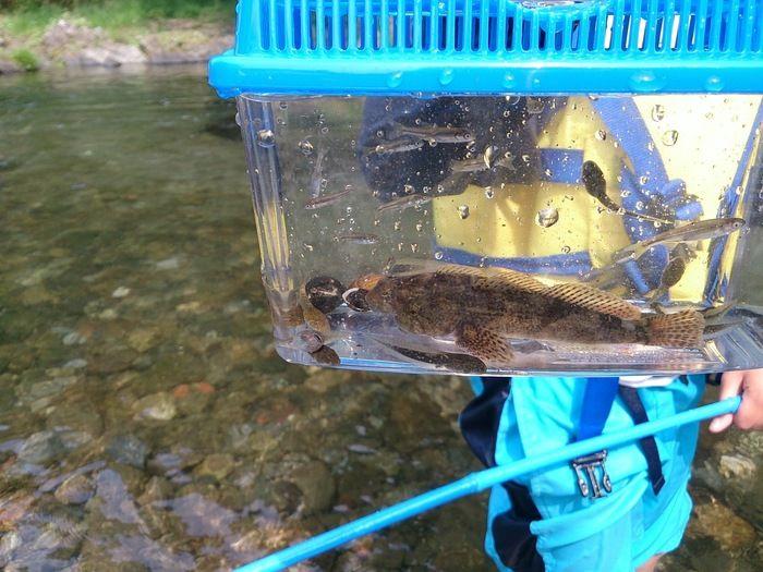 cazuキャンプ場近くの川でとれる魚