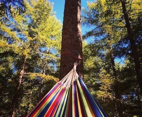 ハンモック越しの木々と青空