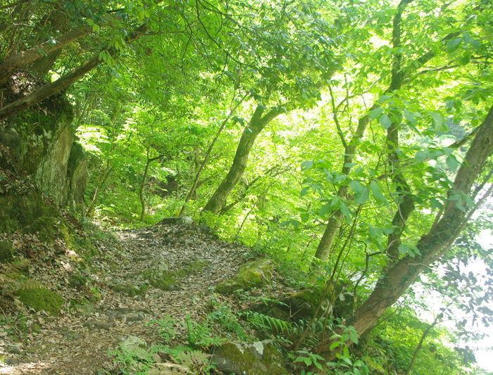 新緑が映える山道
