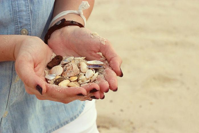 ビーチコーミングで集めた様々な貝殻
