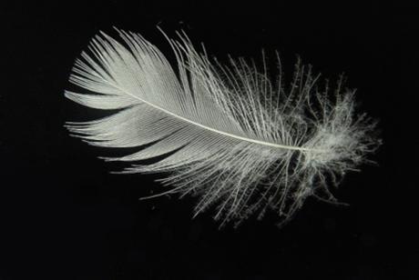 ダウンの羽
