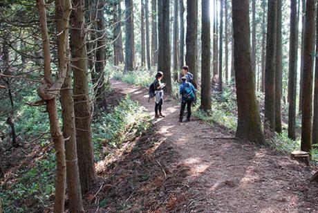 森林を歩く家族