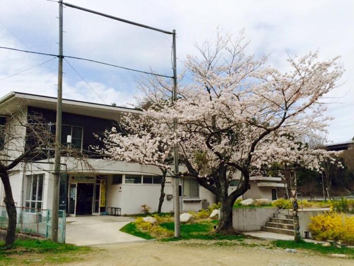 スノーピーク箕面自然館と満開の桜の木