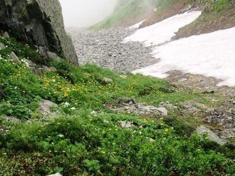 西穂高岳の雪渓やお花畑