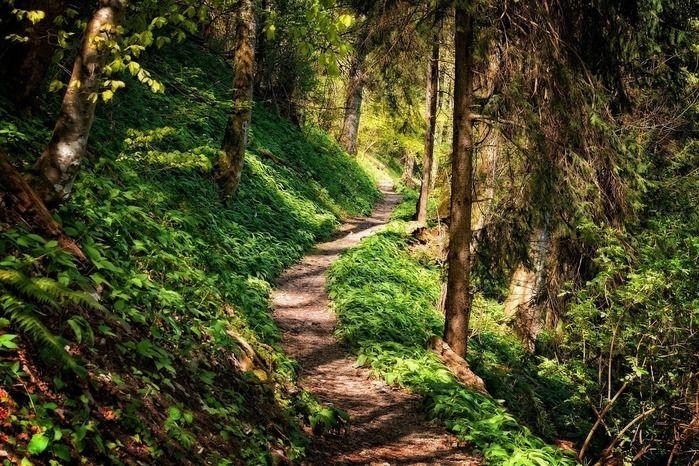 木々が生い茂る山道