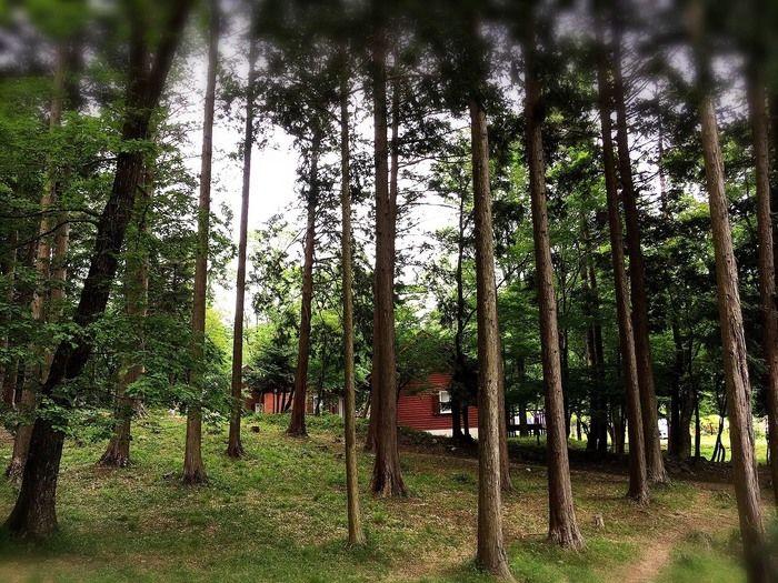 グリム冒険の森の林