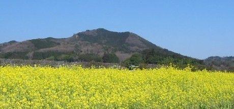 菜の花が平地一面に広がる巾着田キャンプ場の景色