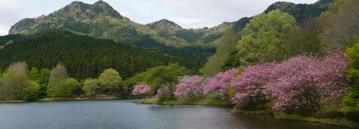 宇都宮森林公園キャンプ場のダム湖の周囲に広がる大自然と四季により変わる木々や花の景色