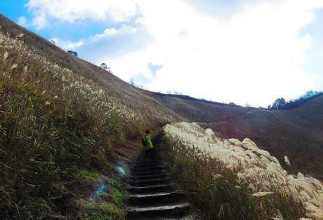 曽爾高原のススキの間の階段