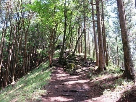 倶留尊山の林道