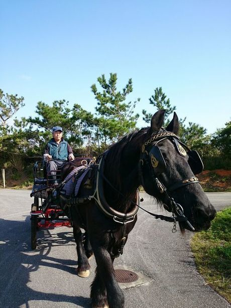 やんばるロハス内で乗れる馬車