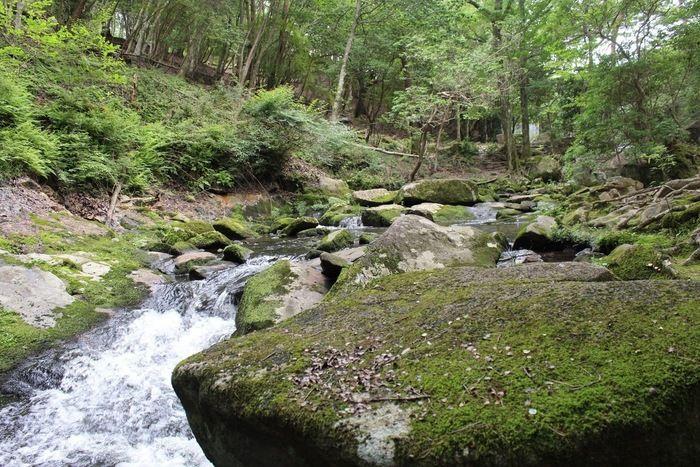るり渓の渓流