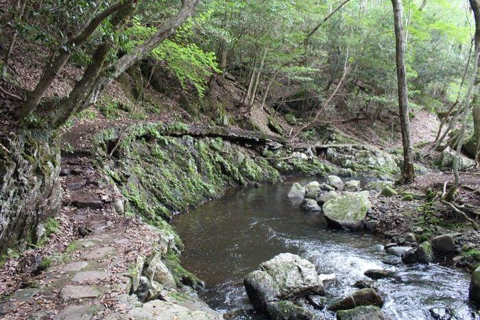 るり渓の渓流遊歩道