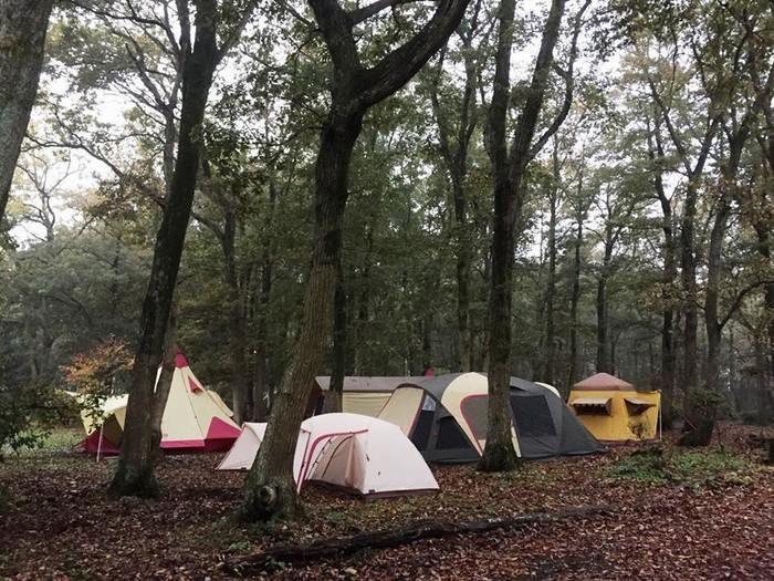 秋のキャンプの様子