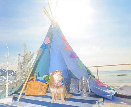 ビーチグランピングのテント内で太陽を見上げる犬