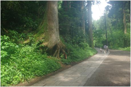 高尾山の表参道コース