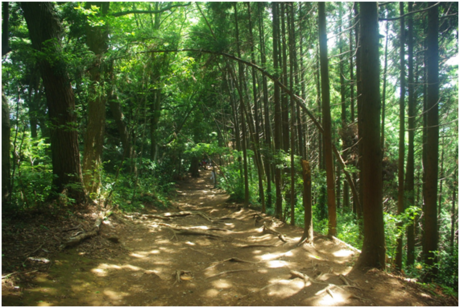 高尾山の稲荷山コース