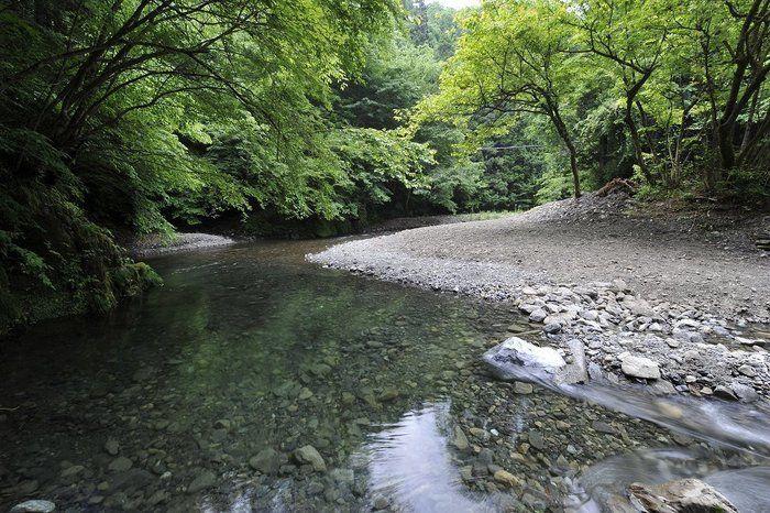 オオタカが住む大自然とヤマメが住むひのはら渓・自然人村の川原