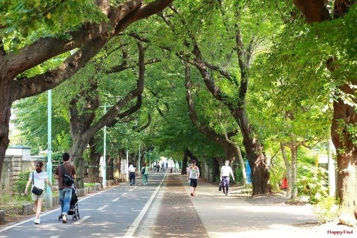 並木道を歩く人々