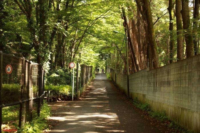 小金井公園へと続く1本道