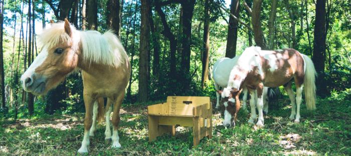森の中の馬とYOKAのチェア