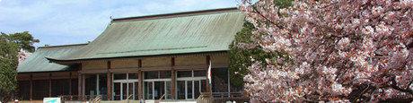 江戸東京たてもの園の桜が咲く外観