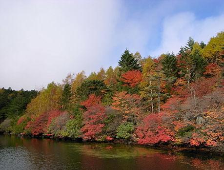(甲信越/長野県)八ヶ岳・麦草峠と白駒池の紅葉
