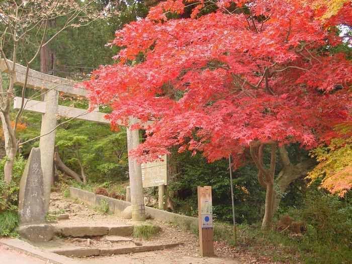 茨城県、筑波山の紅葉