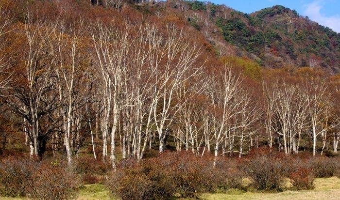 群馬県、赤城山の木々