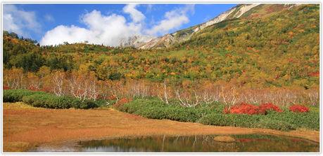 長野県、栂池自然園の紅葉