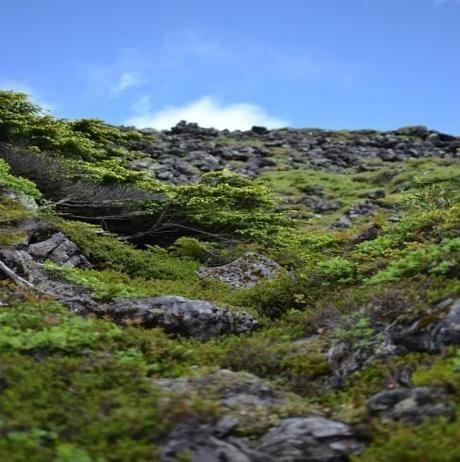凹凸の多い山道