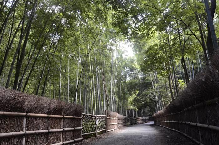 竹の径の様子