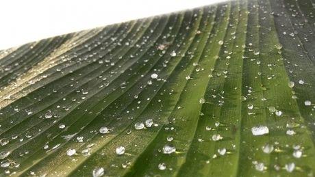 水を弾いている布の表面