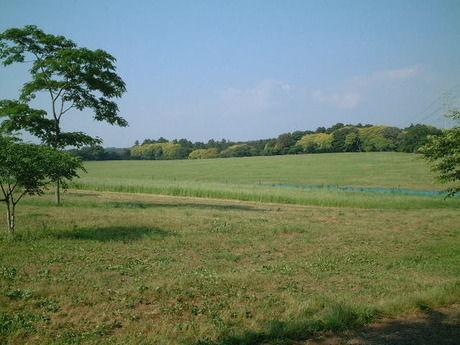 森のまきばオートキャンプ場の広大な野原の様子