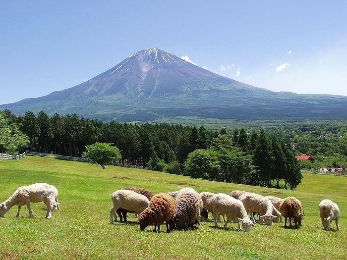 羊がいる富士花鳥園