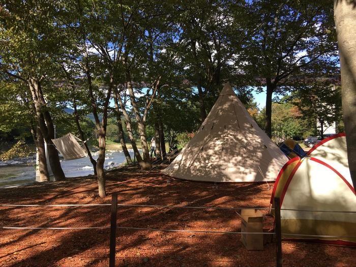 秋の森のほろよいバルで使われたノルディスクのアルフェイム19.6のテント