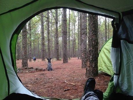 テントから見える外の様子
